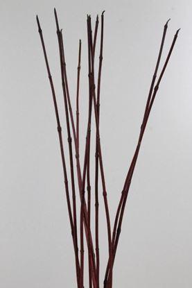 Picture of Cornus Red