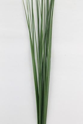 Picture of Steelgrass